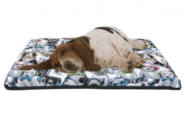 Viscomascota: el colchón viscoelástico para tu mascota