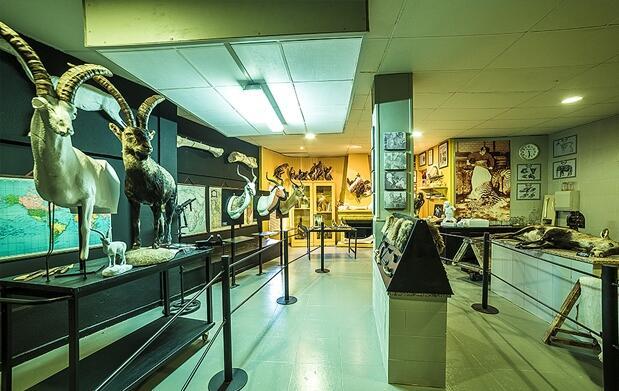 Entradas Museo de Caza y Naturaleza