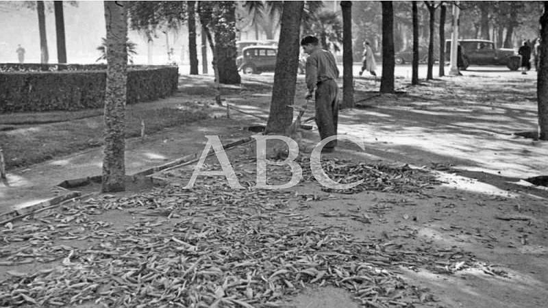 Madrid, diciembre de 1955. En la imagen, un jardinero barriendo las hojas que han ca�do de los �rboles durante el oto�o en el Parque del Retiro