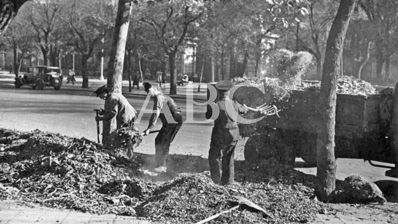 Madrid, diciembre de 1955. Los jardineros recogiendo las hojas de los �rboles que han ca�do durante el oto�o en el Parque del Retiro