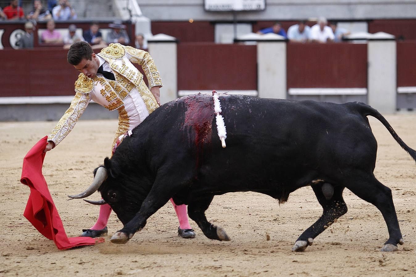 Imágenes de los míticos toros de Pablo Romero en Las Ventas