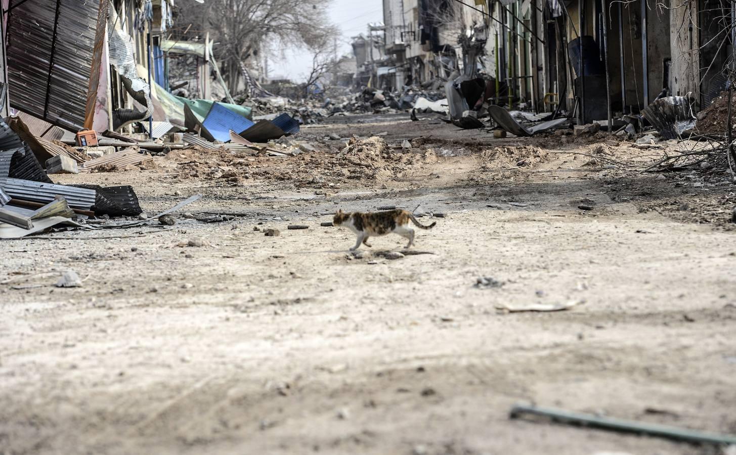 Las imágenes de Kobani tras ser liberada del asedio del Estado Islámico