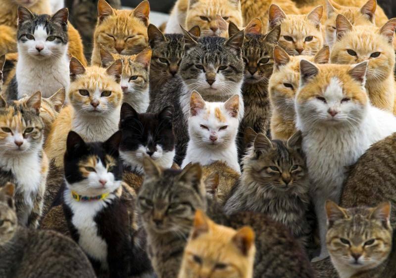 Así es Aoshima, la isla que tiene más gatos que habitantes