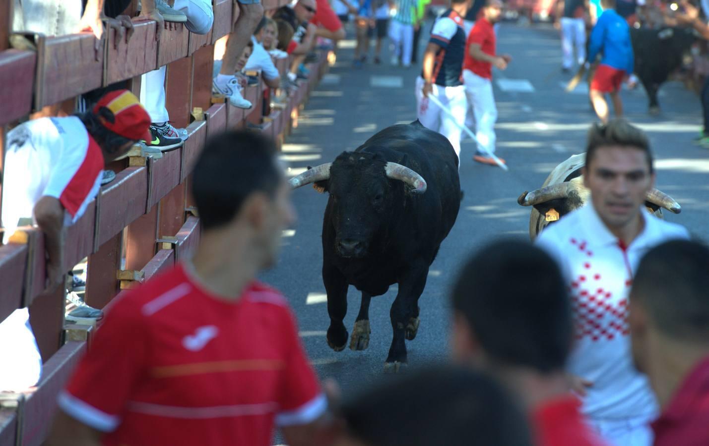 Así fue el primer encierro de Alcalá de Henares