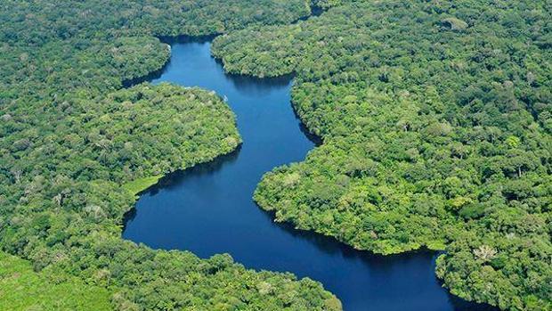 Día Internacional de los Bosques Tropicales: Curiosidades