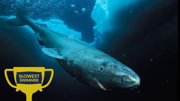 Ocho asombrosas especies de tiburones