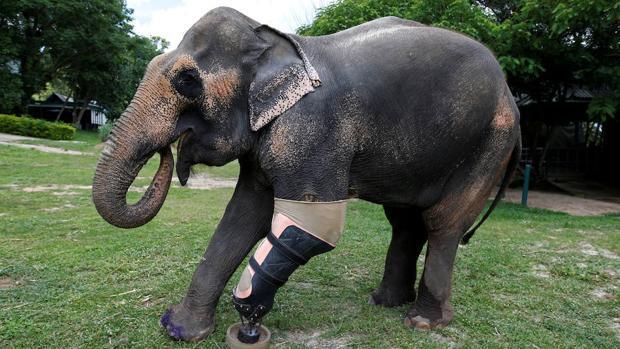 Una prótesis para Mosha, que perdió una pata tras pisar una mina hace diez años