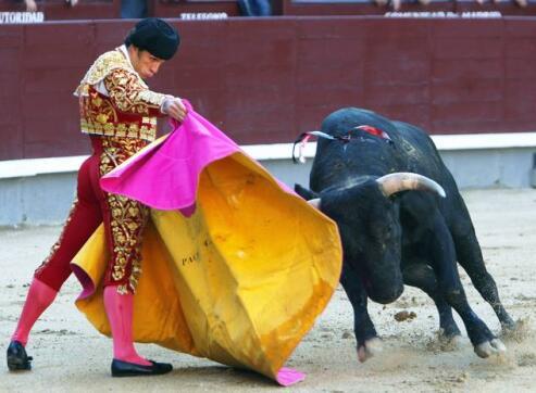 17/05/2010.- El novillero Paco Chaves recibe a su astado con el capote, durante la novillada