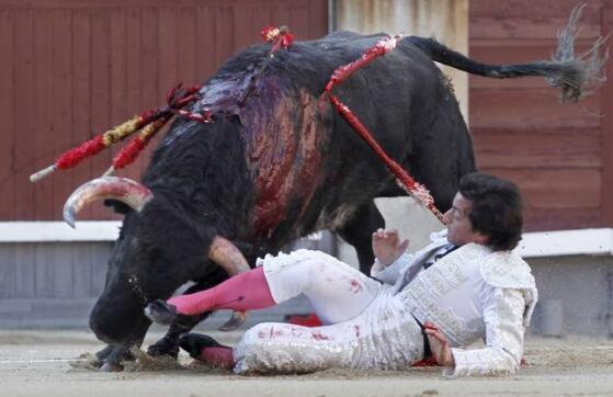16/05/2010.- El diestro Gabriel Picazo es cogido por su primer toro al entrar a matar