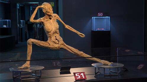 Entradas Human Bodies Barcelona 2019