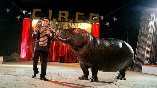 Animales en el Circo Las Vegas